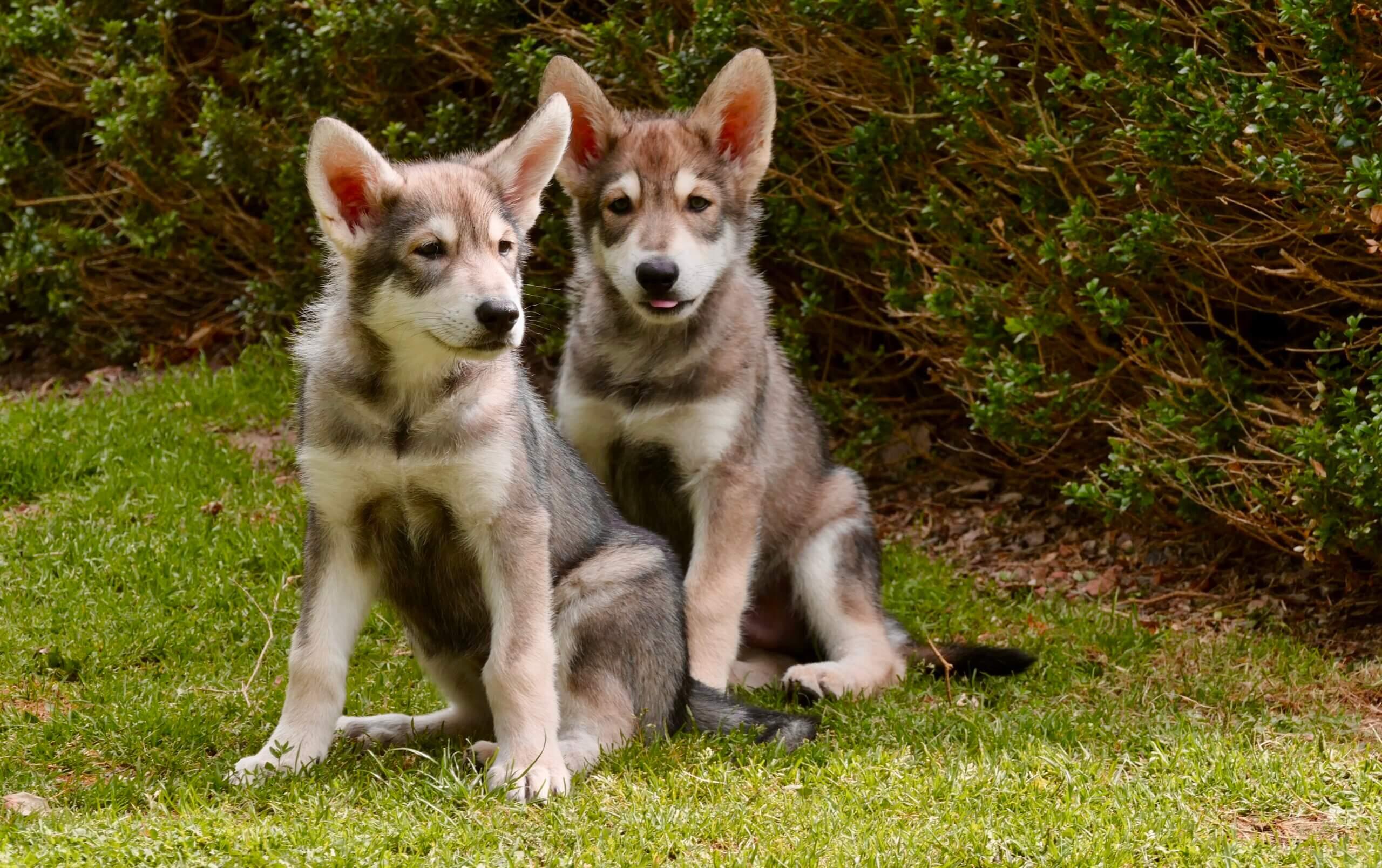 intuïtie & puppy's